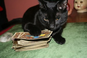 cat with tarot cards