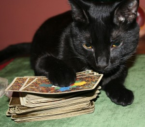 Carl - tarot reading cat