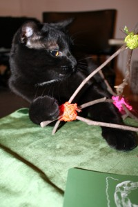 Carl JK attempts to destroy Magnolia Wood Tarot Easel