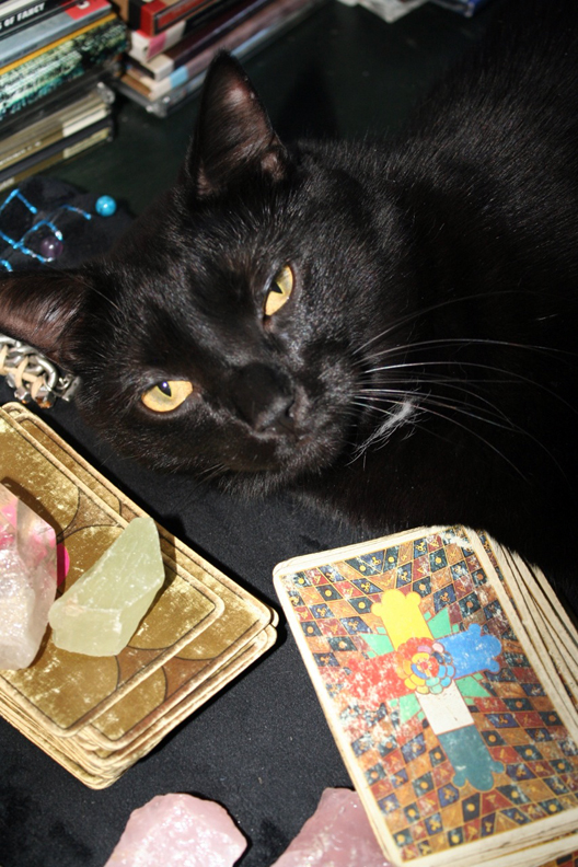 Carl JK napping with the Tarot