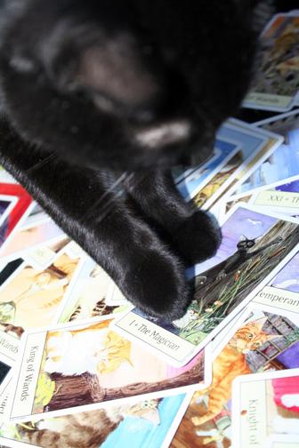 Carl JK reads the Cat's Eye Tarot by Debra M. Givin
