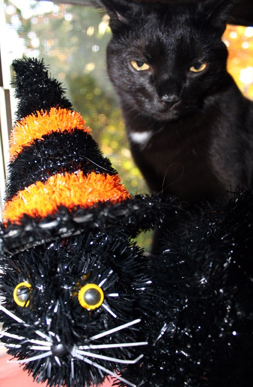 Carl JK and Friend - Happy Halloween!
